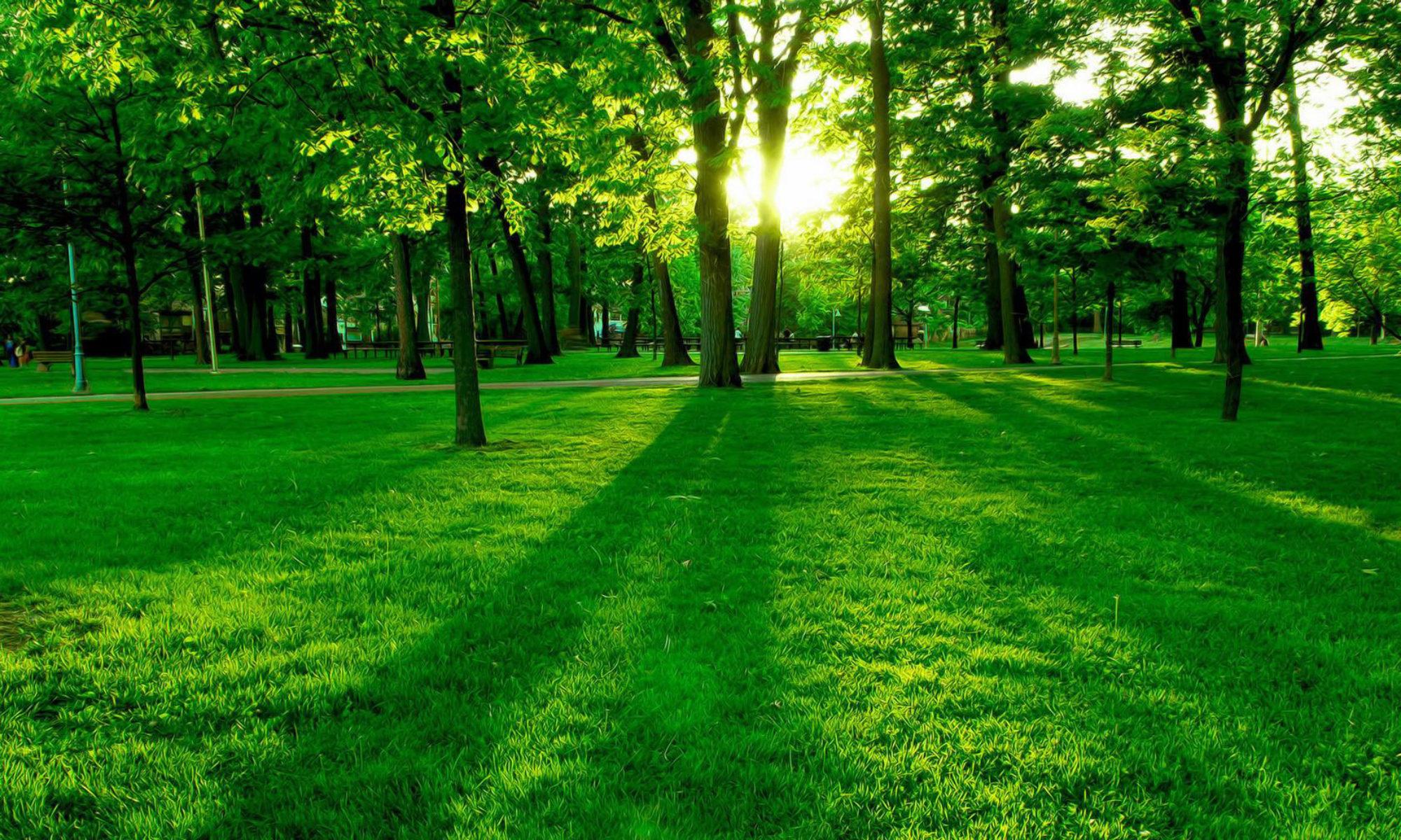 Life Green